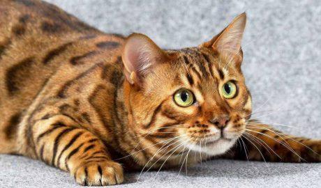 Кошка в подарок от Сбербанка